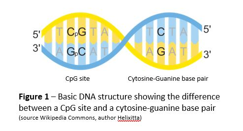 diagram of basic DNA structure