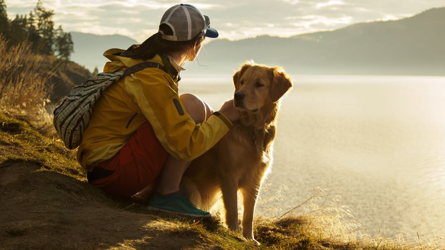 Photo of a woman and her Golden Retriever hiking on a mountain at sunset