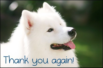American Eskimo Dog with text Thank you again!