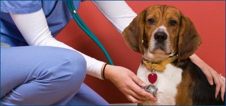 Beagle Exam
